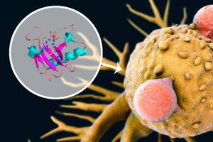 Mix aus Enzymen effektiv gegen Hautkrebs