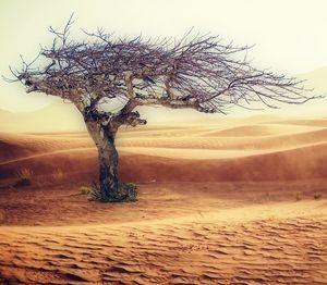 Baum in Wüste