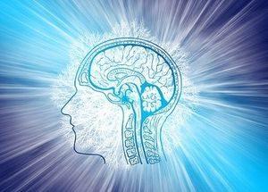 Gehirn im Fokus