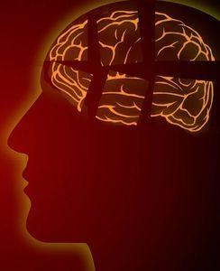 Gehirnbereiche