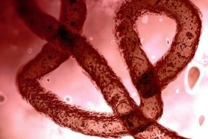 DNA-kodierte Antikörper merzen Ebola aus