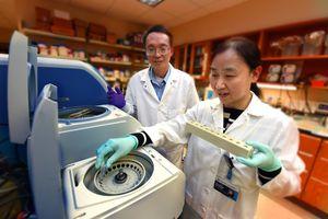 Akutes Nierenversagen: microRNAs als Therapie