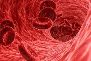 Blutgefäße