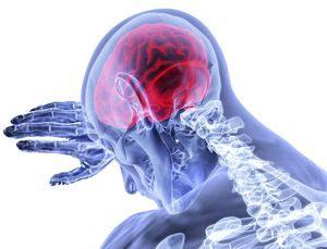 Schwerpunkt Gehirn